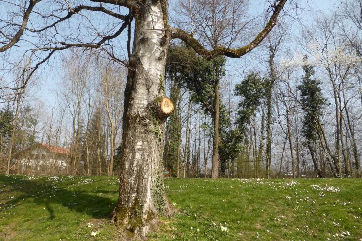 03 l arbre jean marc feuillas